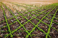 merging fields